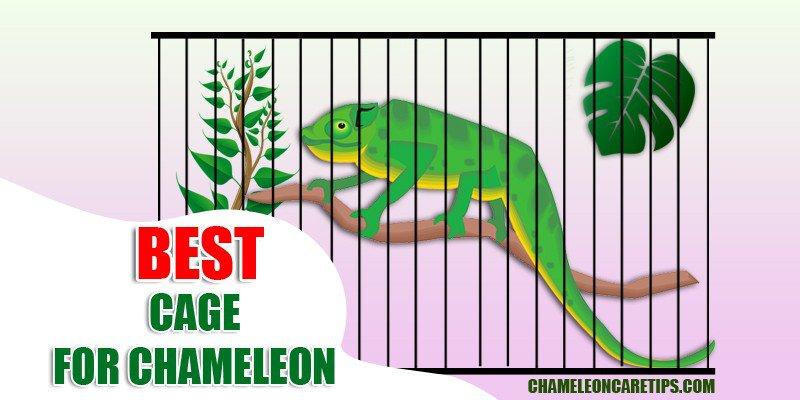 Best Cage For Chameleons