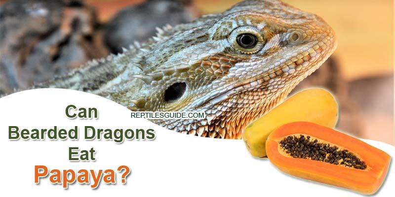 Can Bearded Dragons Eat Papaya